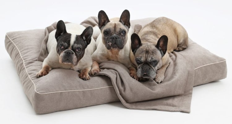 Best Orthopedic Dog Beds Reviews